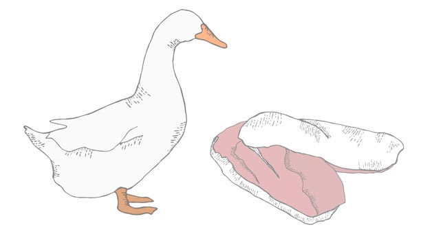 moulard duck drawing